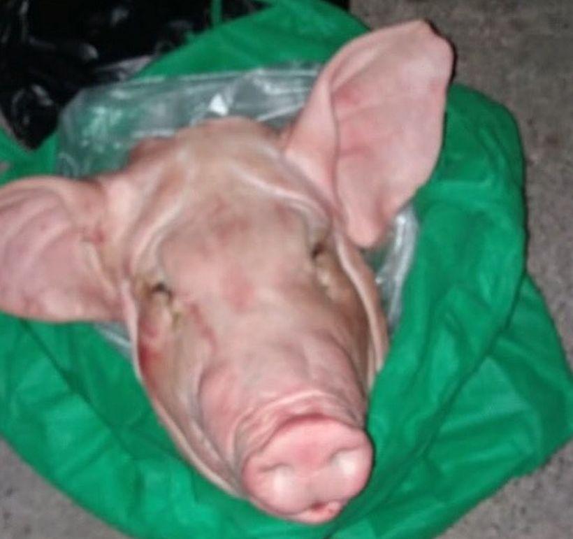 Vecina de Vitacura recibió cabeza de chancho en jardín de su casa