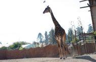 Buin Zoo inició campaña de recaudación de fondos