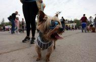 Colegio Médico Veterinario se refirió al eclipse y su efecto en fauna y mascotas