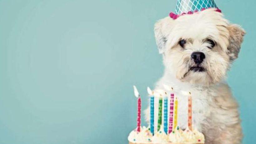 Día Mundial del Perro: sepa cómo regalonearlos para que de verdad gocen